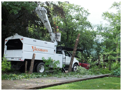 Arborists Trimming Trees in Pittsburgh, PA