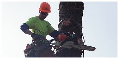 Arborist Cutting Tree in North Pittsburgh, PA