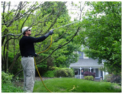 Arborist Spraying Tree Branches in Pittsburgh, PA